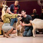 עיזה פזיזה: ביקורת על ההצגה Goats