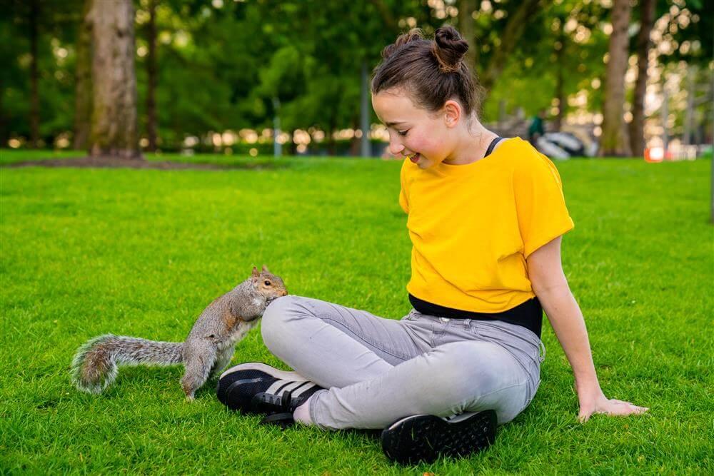 סנאי בפארק בלונדון
