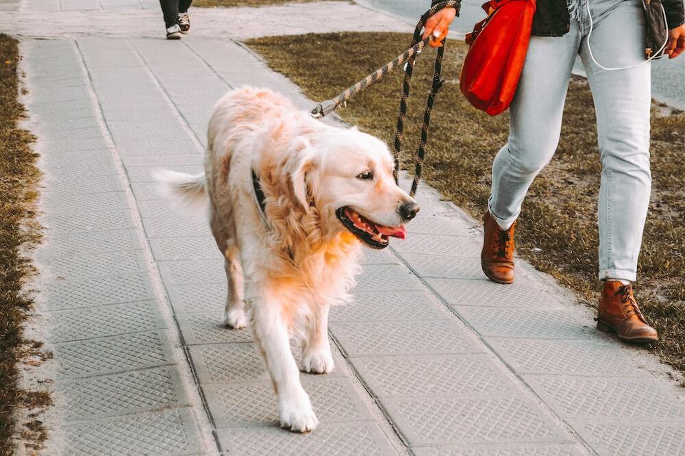 כלבים בלונדון