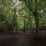 חמש דקות תיאורטיות: הרהורים ביערות של אנגליה