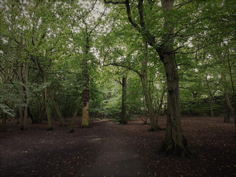 יער בצפון לונדון
