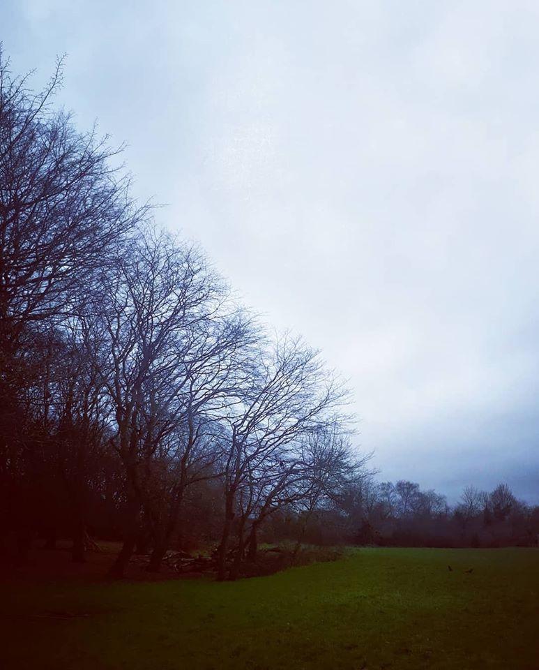 עצים באנגליה